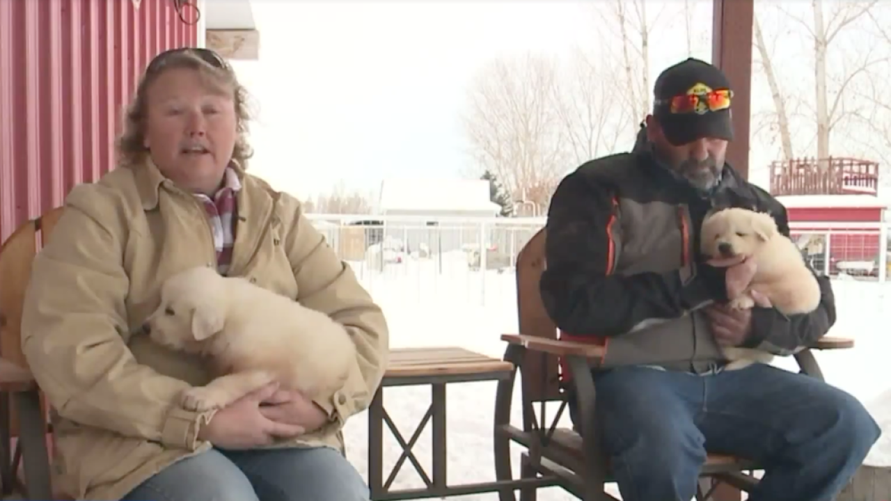 'Just dumb luck:' Snowmobilers rescue Great Pyrenees puppies from Utah mountaintop