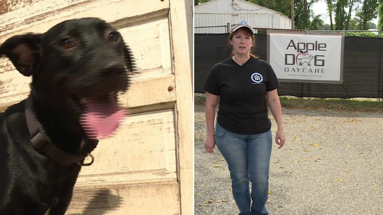 Glen Allen dog daycare shelters pups fleeing HurricaneDorian