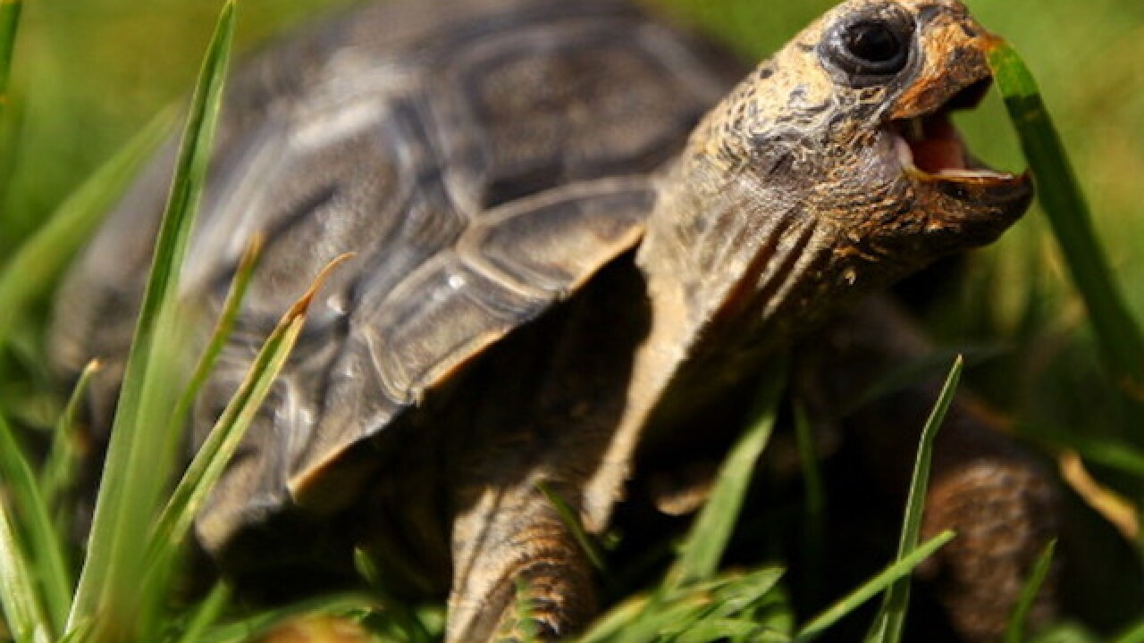 Missing 115-year-old tortoise returned to New Mexico owner