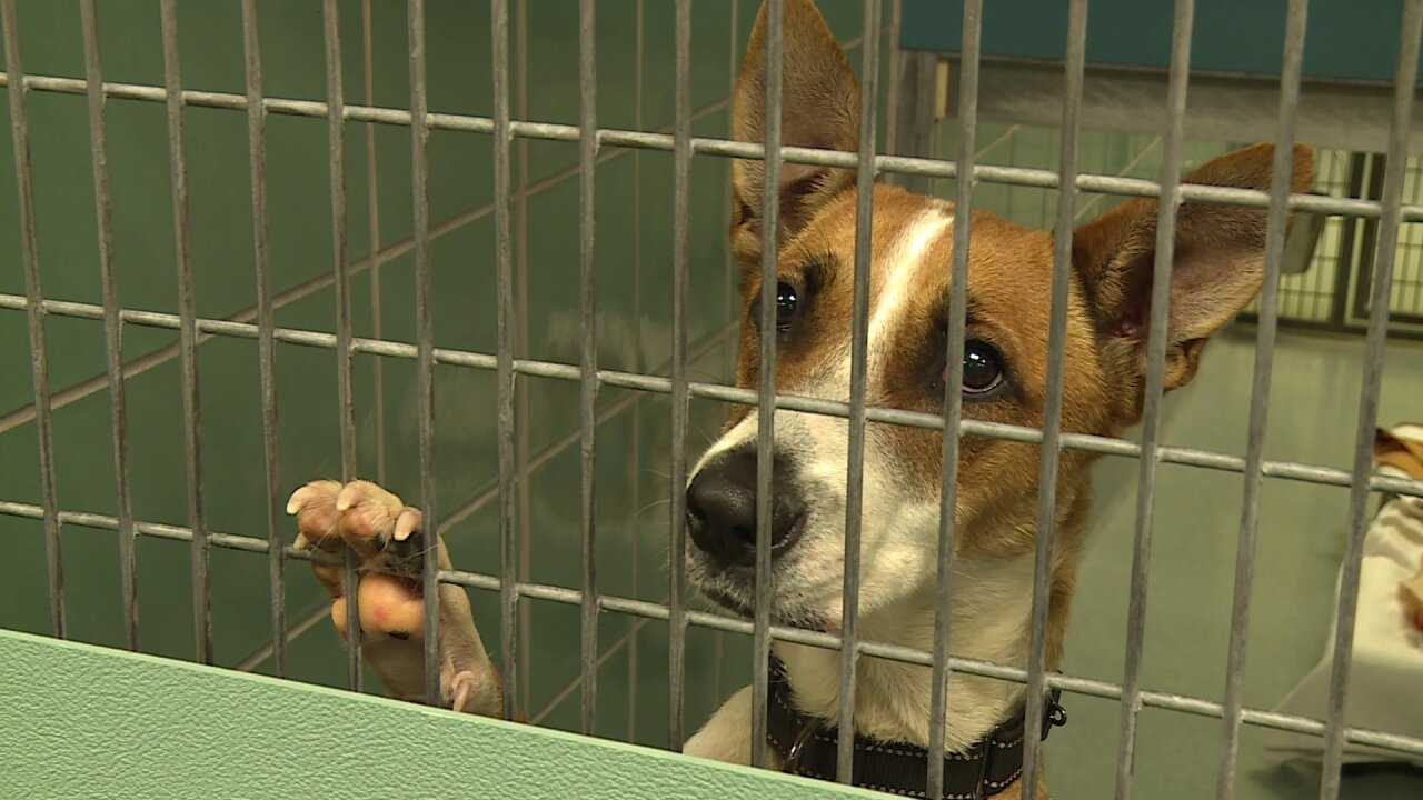 Pups in peril arrive in RVA; how you can help animals from shelters in Dorian'spath