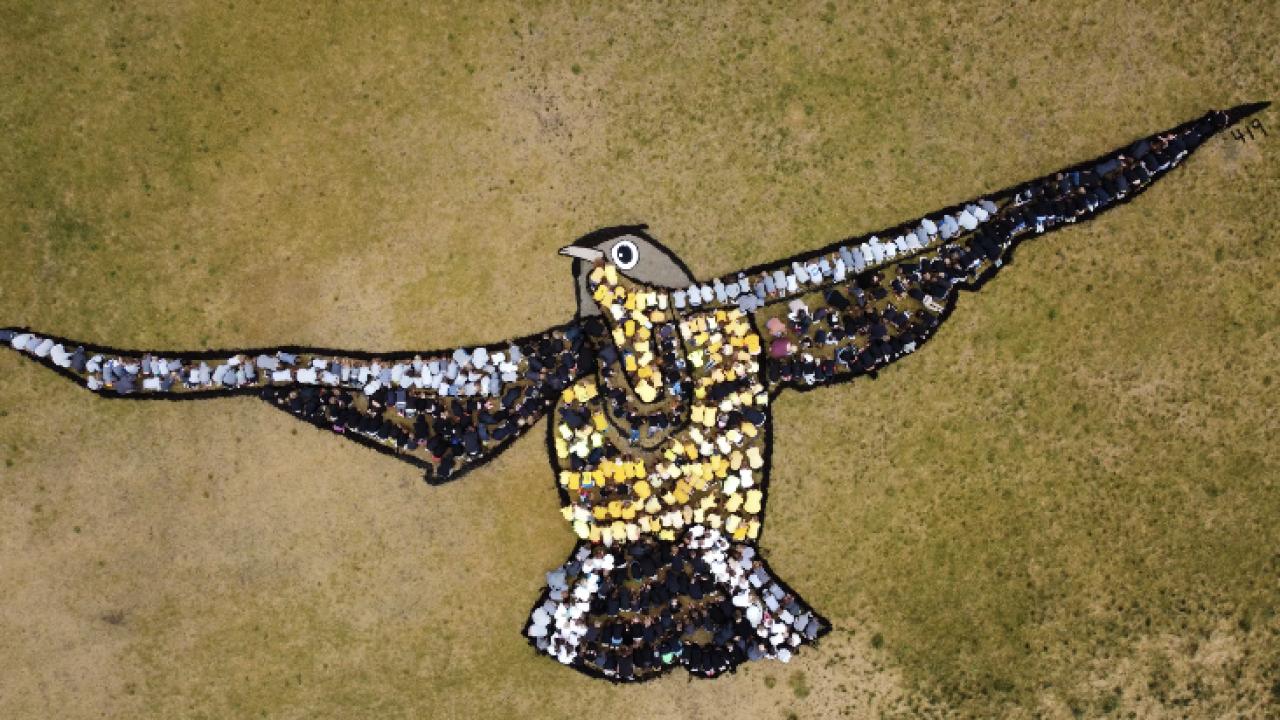 meadowlark living art.png