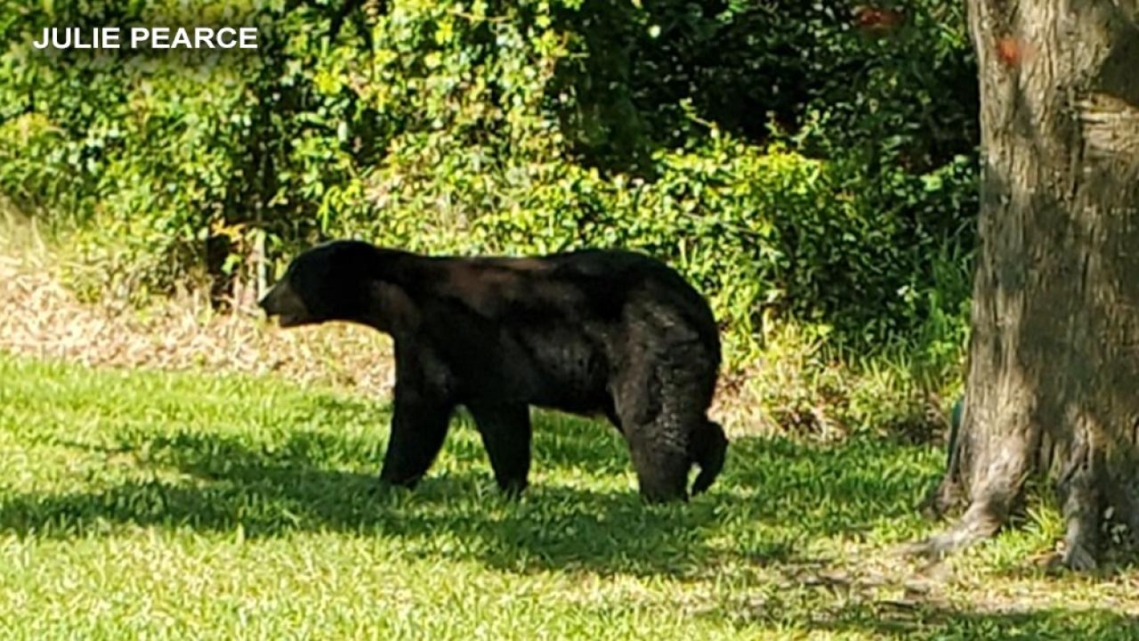 BEAR-002.png