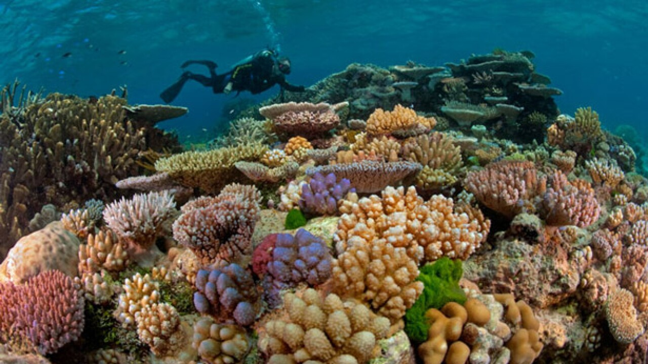 Australia given another year to act on Great Barrier Reef