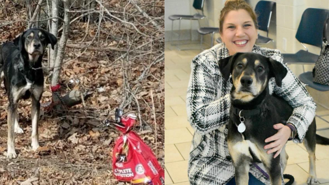 Dog found tied to tree with goodbye note attached to collar gets adopted