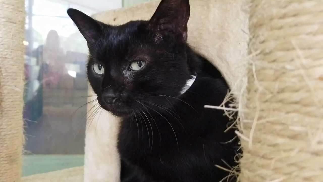 wptv-black-cat.jpg