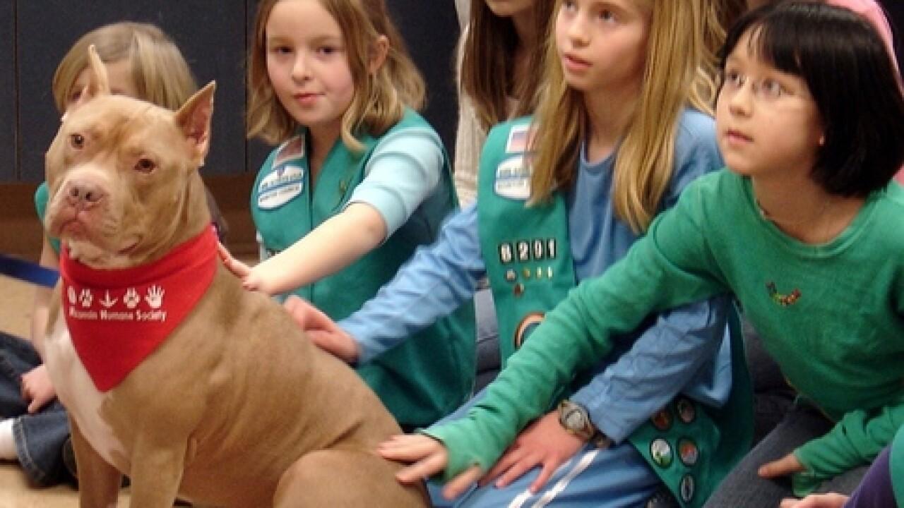Humane Society's pit bull ambassador dies