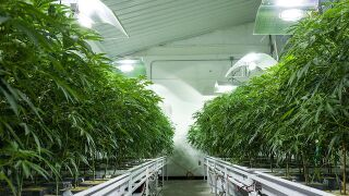1 year later: Good and bad of pot legalization