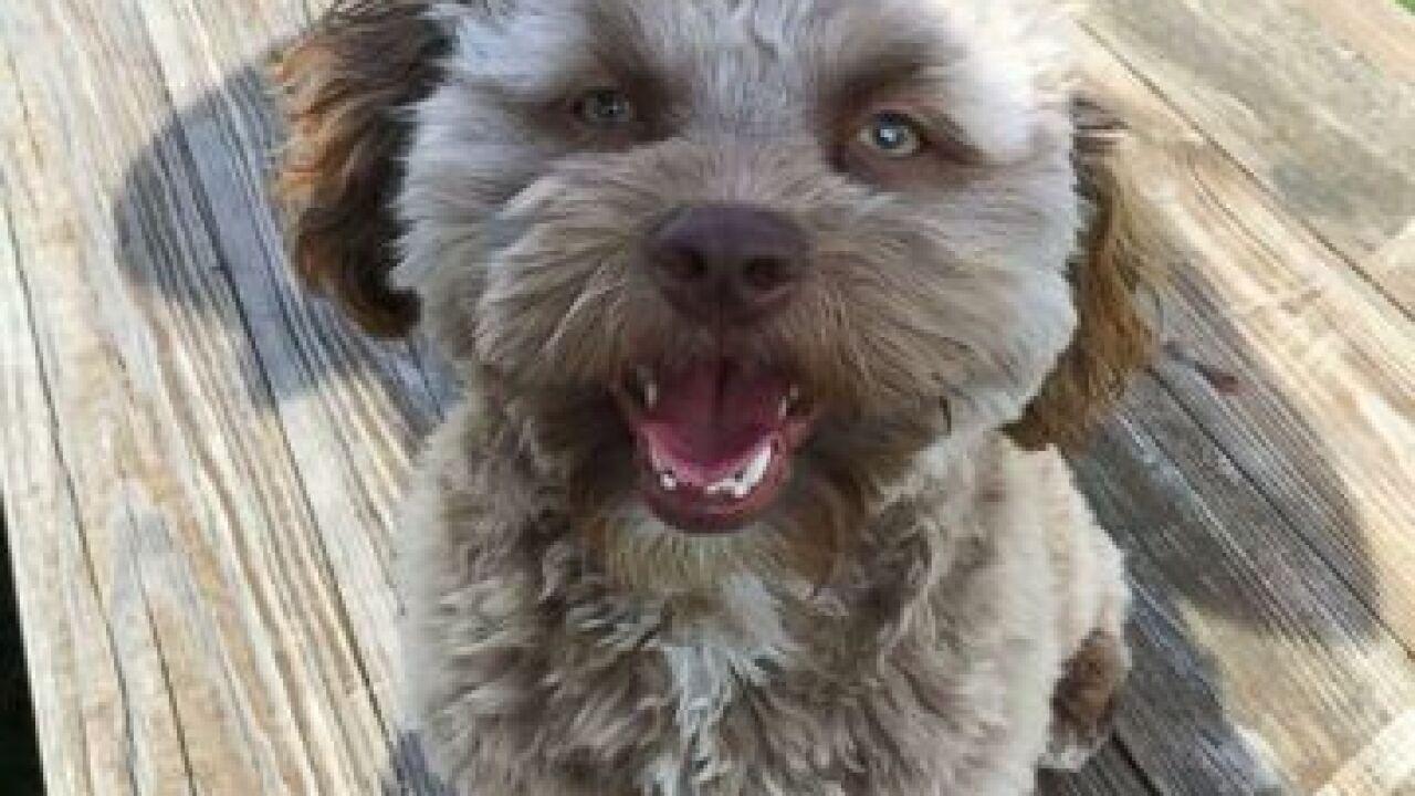 Internet goes crazy over human-like dog