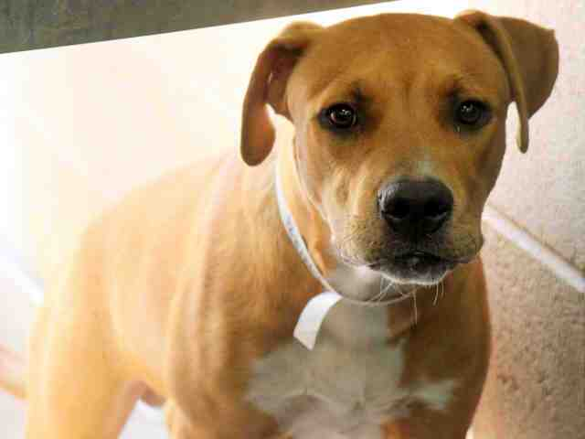 Adoptable pets from Maricopa County Animal Care and Control and Arizona Humane Society (9/8)
