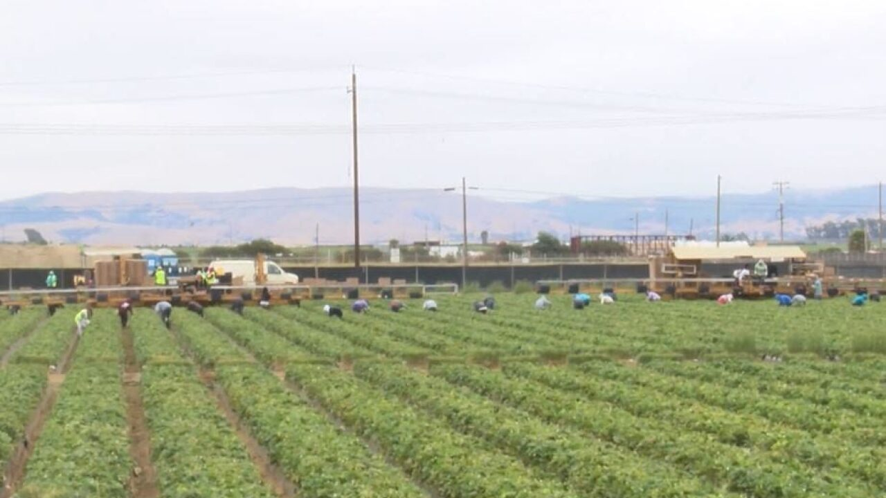 Farm workers in California now eligible for overtime after 9.5 hours