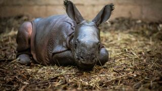 rhino baby day one-3306.jpg