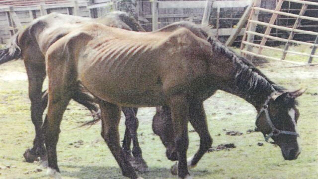 Deputies: Mom, daughter starved animals