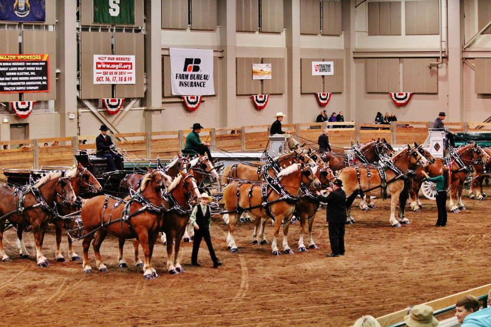 Michigan Great Lakes International Draft Horse Show and Pull