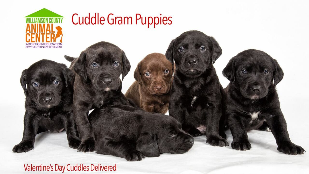 You Can Cuddle Puppies On Valentines Day With Cuddle Grams