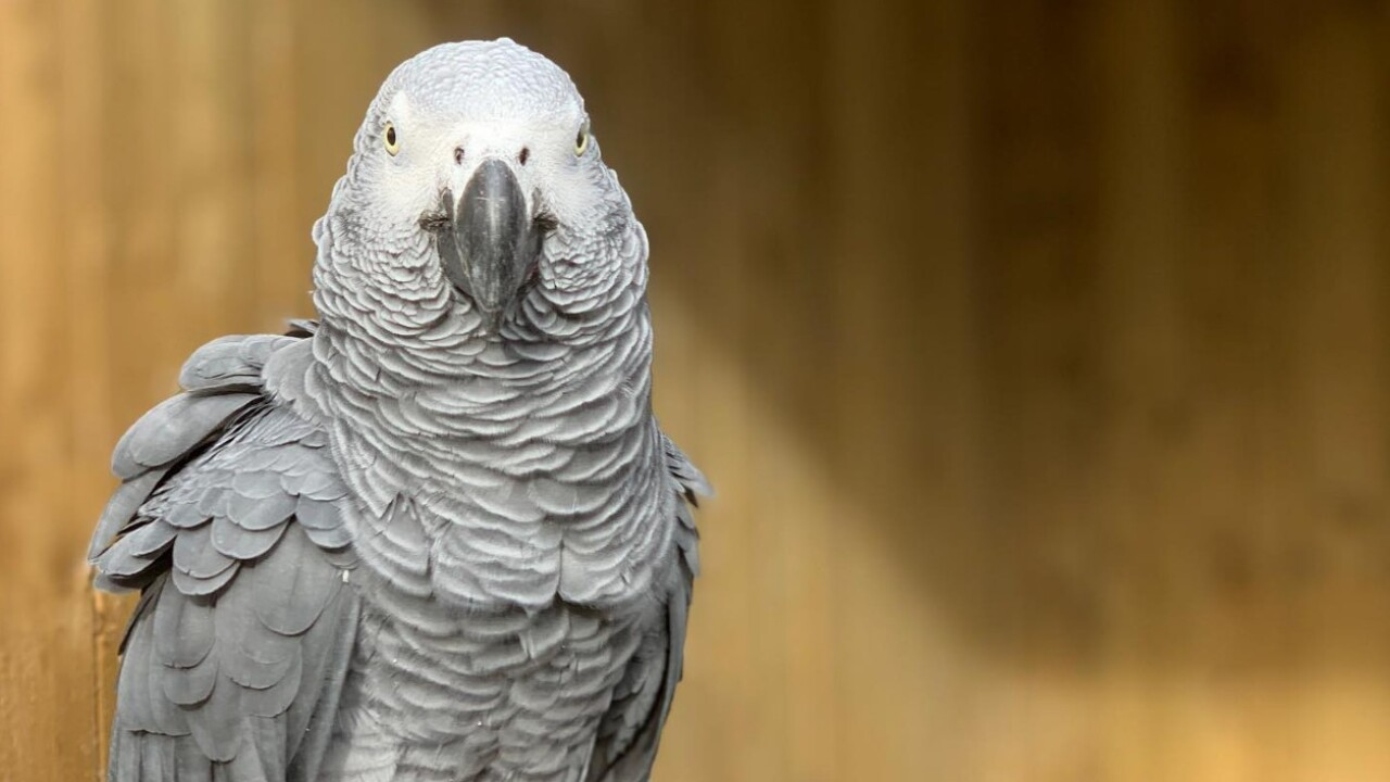 Wildlife park forced to move parrots that kept swearing at guests