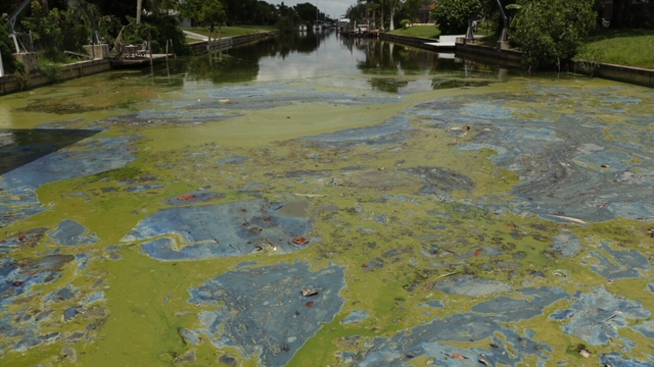 Federal grant will help pay for algae removal in Lee County