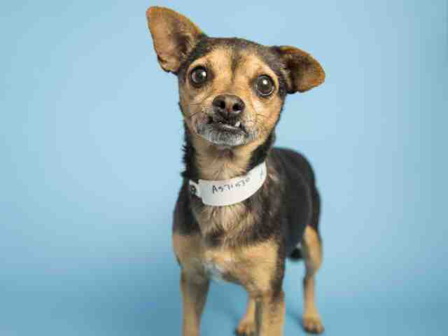 Adoptable pets from Arizona Humane Society and Maricopa County Animal Care and Control (12/27)