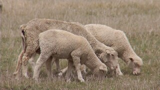 136th Annual Montana Wool Growers Convention held in Billings
