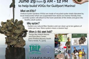 TB Watch oyster Gulfport