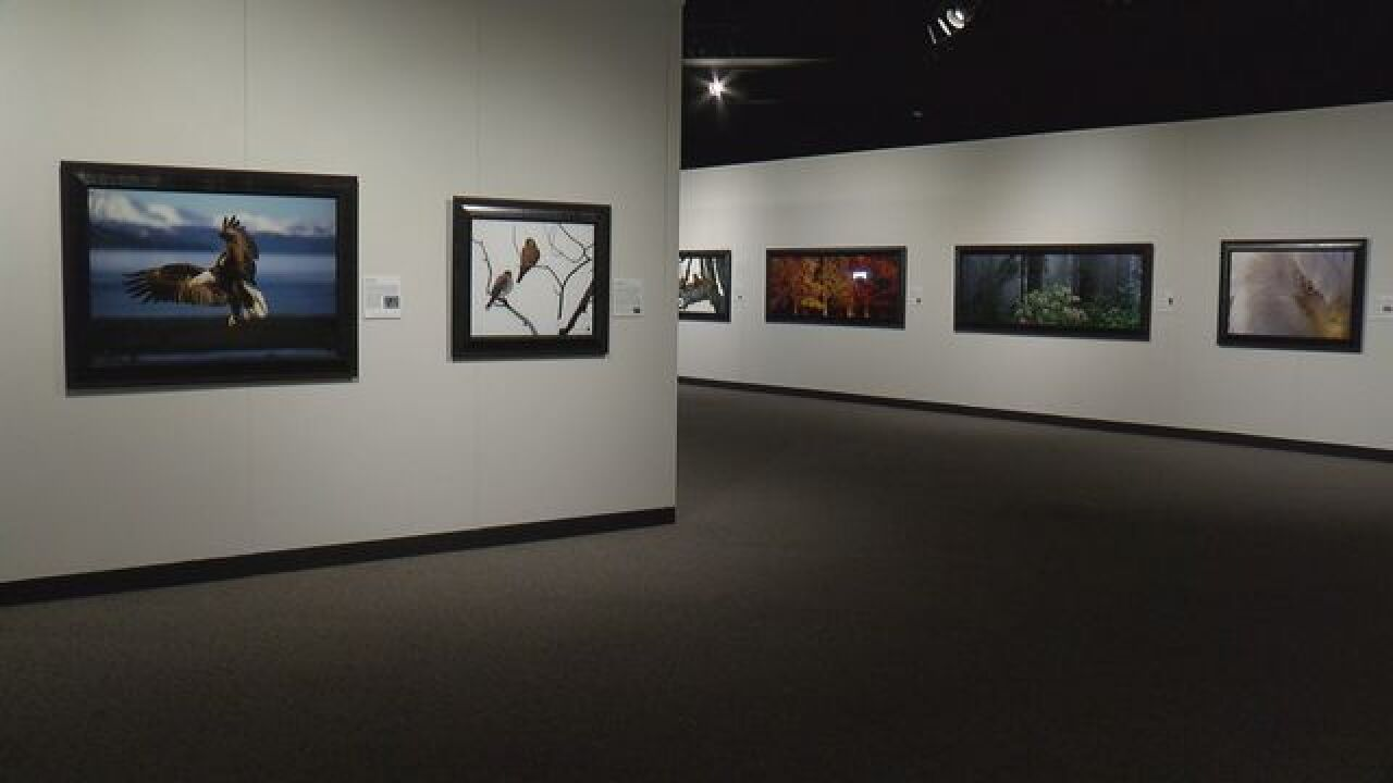 Mangelsen photographs on display