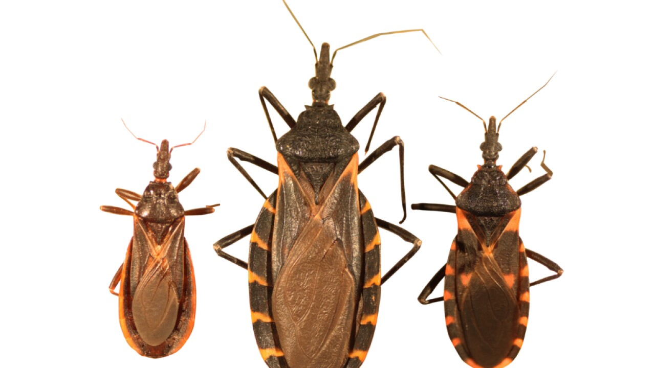 Bloodsucking 'kissing bug' that usually bites people in the face found in Delaware for first time