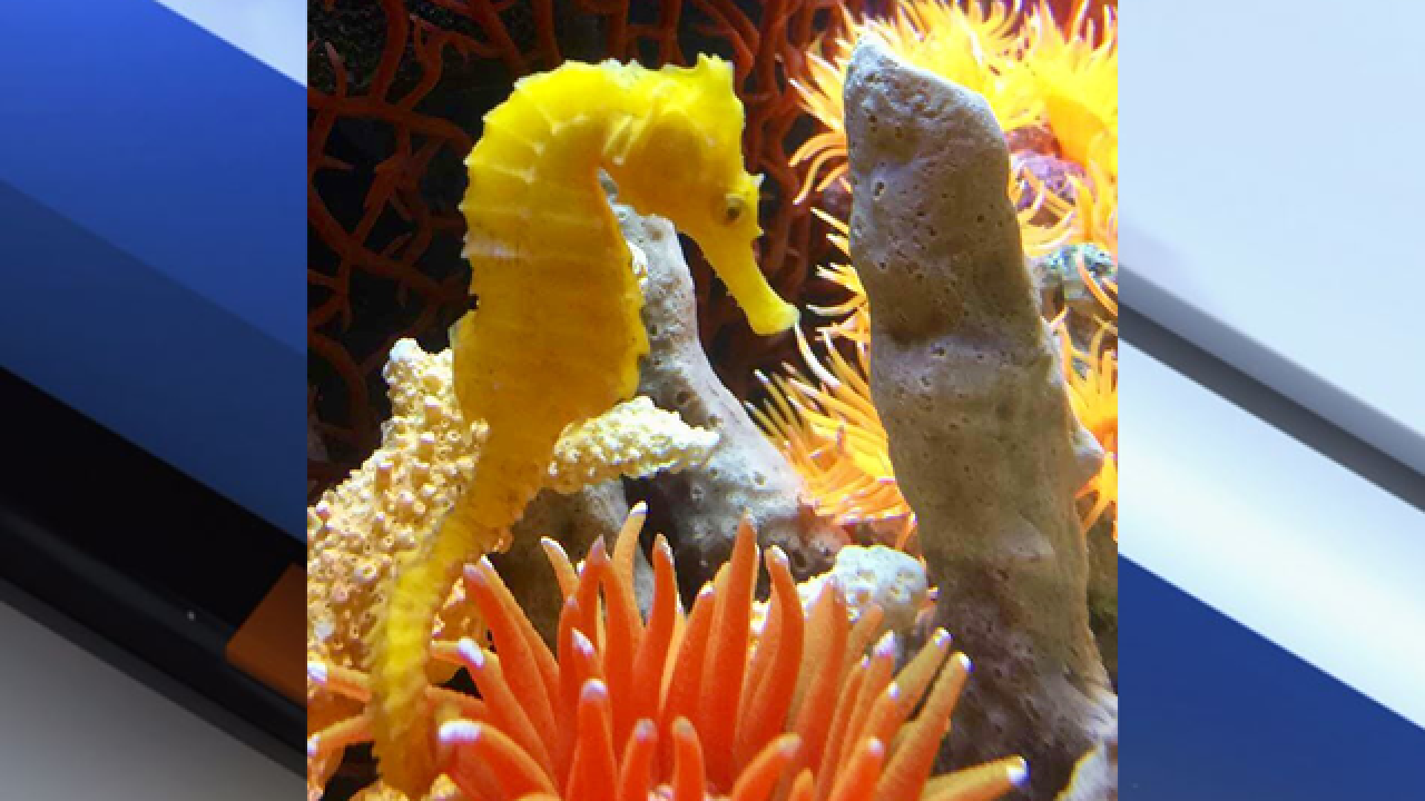 Seahorse mistaken for Cheeto falls out of sky