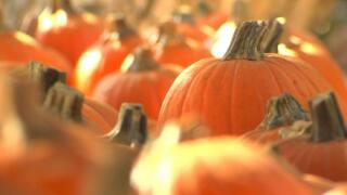 Harnessing the healthy powers of pumpkins