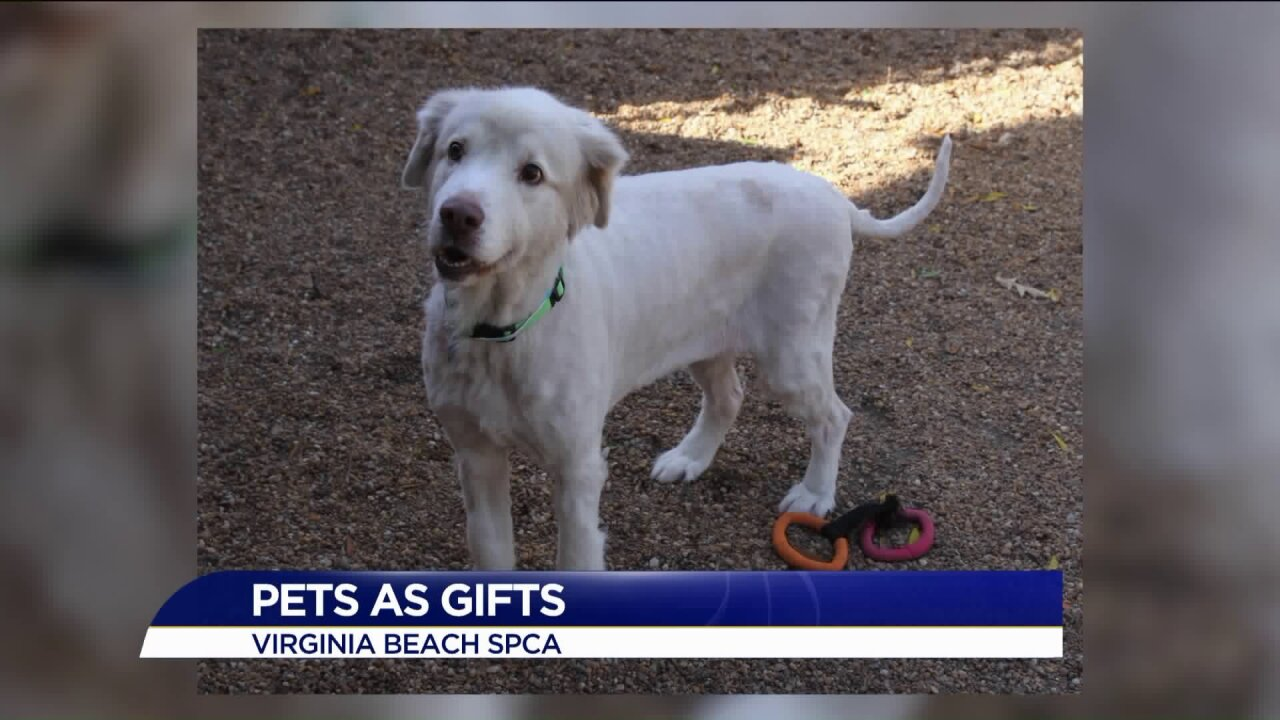 Giving pets as presents may not be the best idea, what to consider before youcommit