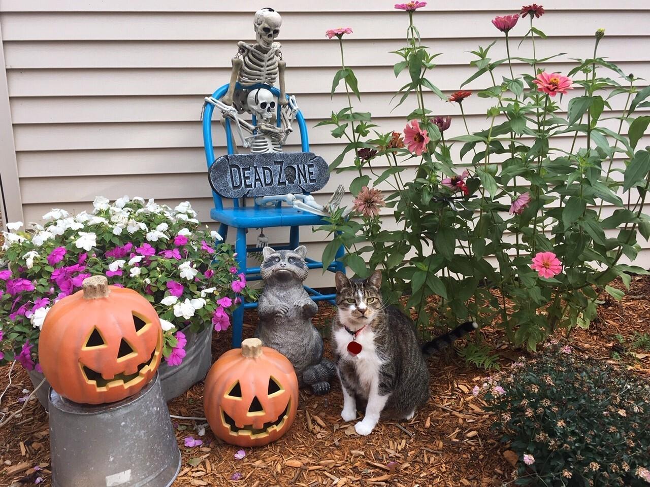 Halloween Decorations15.jpg