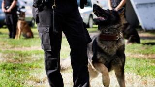 Fortville Police Department raising money for new K-9