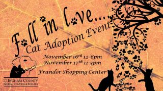 """Fall in Love"" Cat adoption event"
