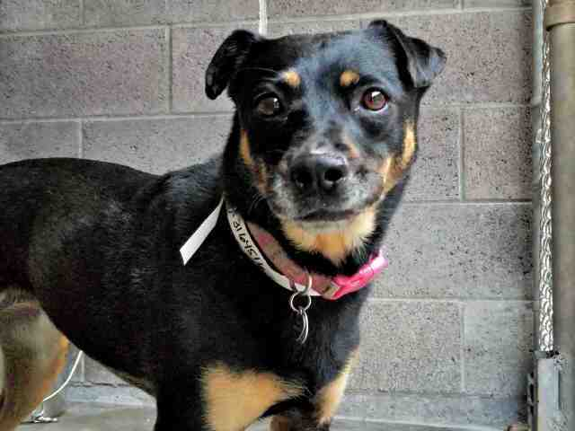 Adoptable pets from Maricopa County Animal Care and Control and Arizona Humane Society (9/15)
