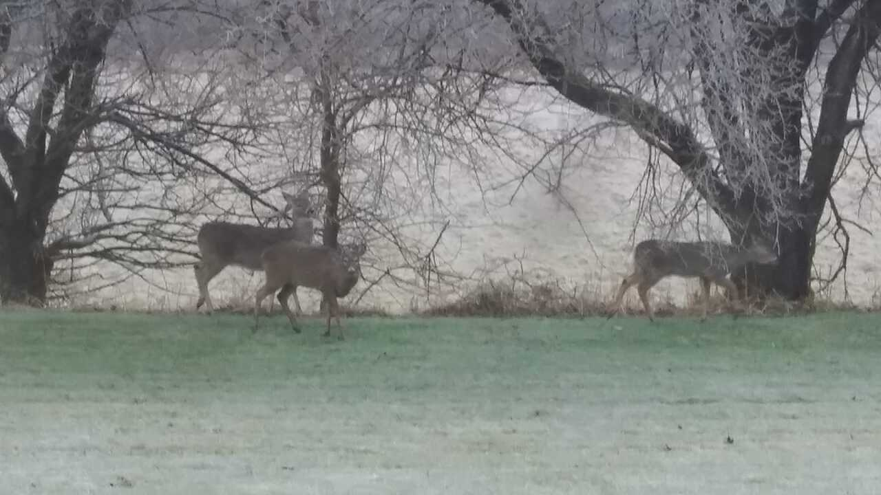 Deer in an Icy Field - Pete Zylstra via Facebook.jpg