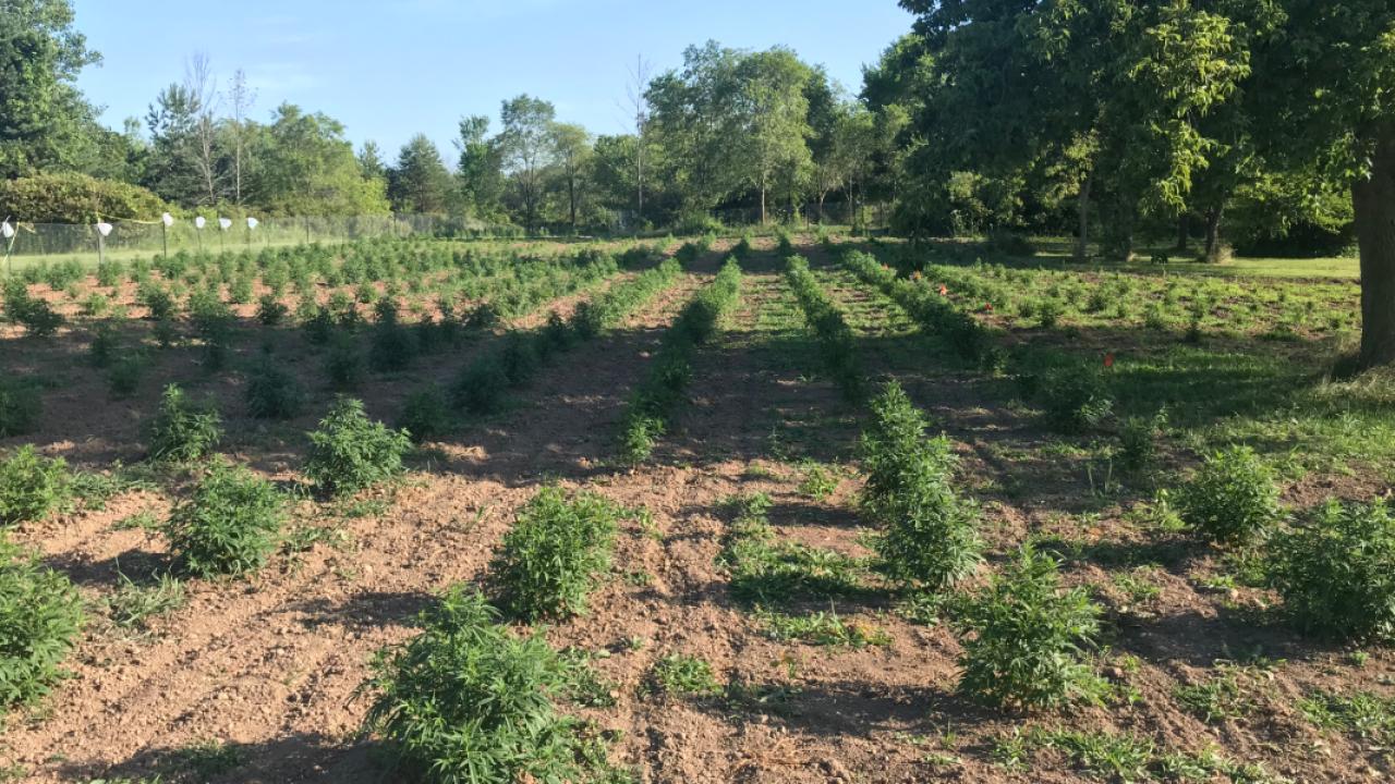 Oak Creek family grows hemp in backyard to treat son's epilepsy