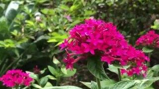 wptv-flowers-plant-.jpg