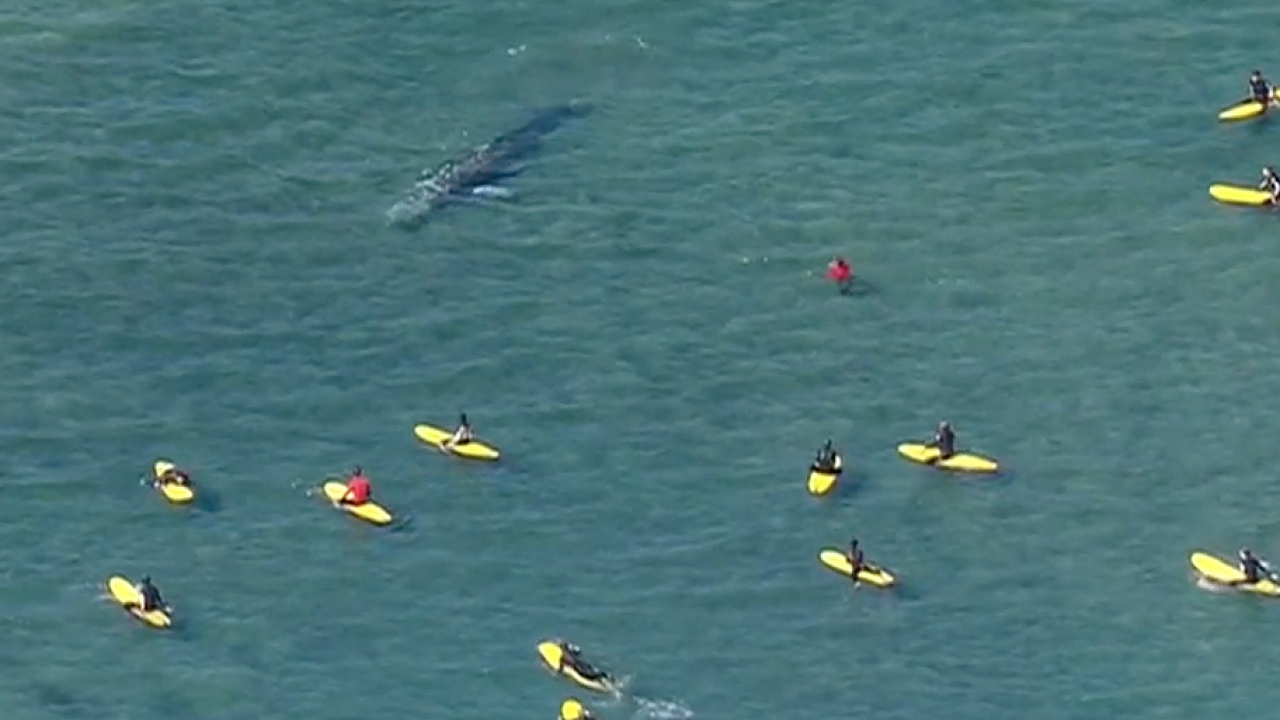 gray whale mission beach 02.27