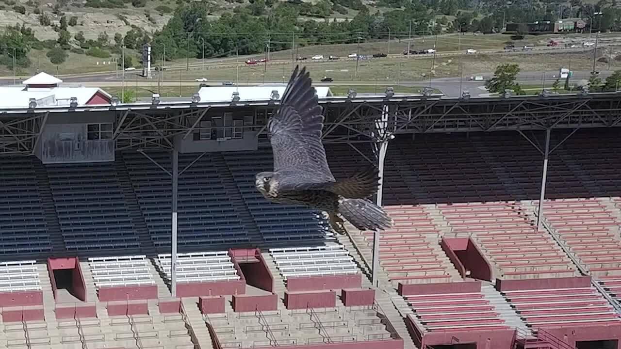falcon at metra.jpg
