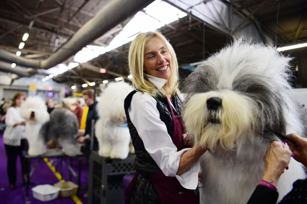Look at all the dogs: Westminster Kennel Club hosts annual dog show in New York