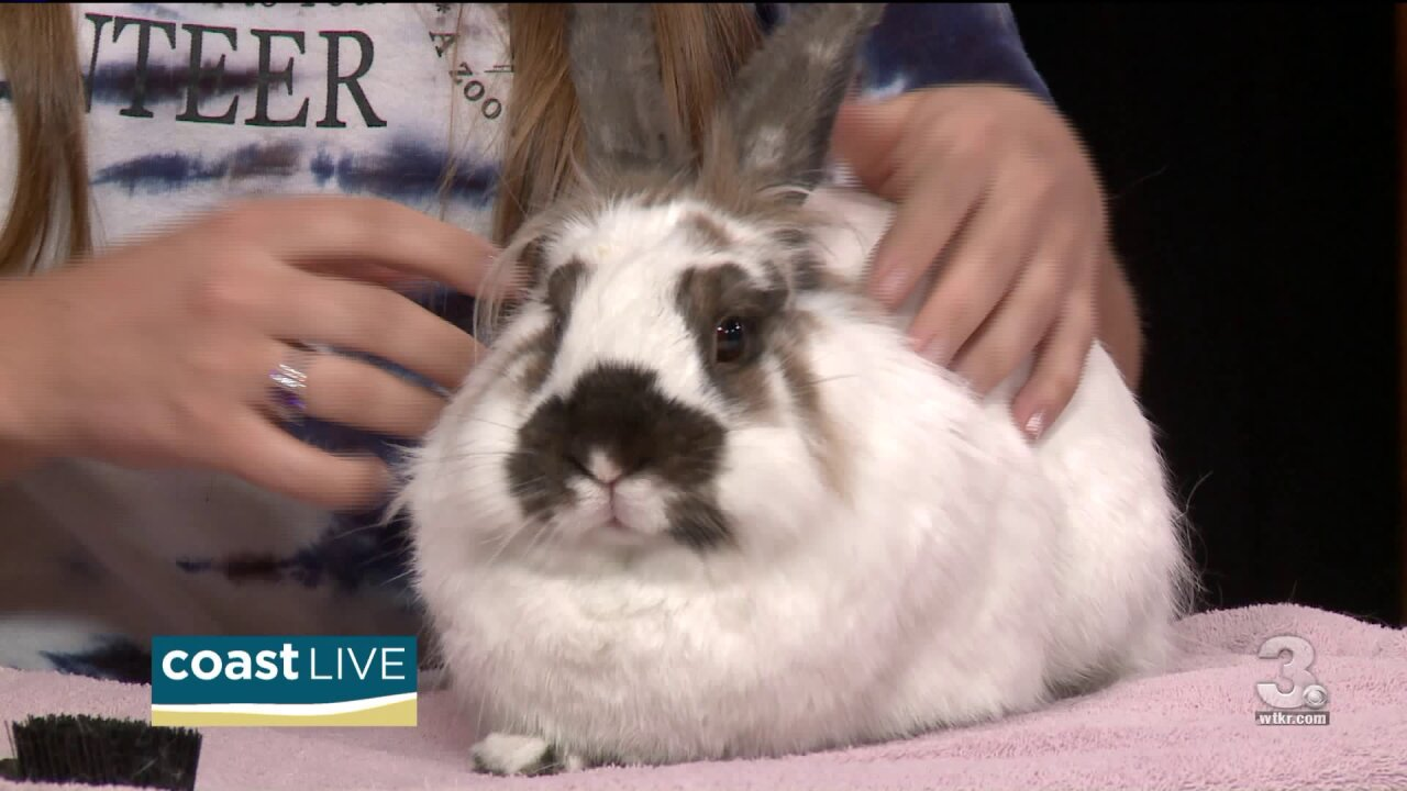 Advice before you choose an exotic pet on Coast Live