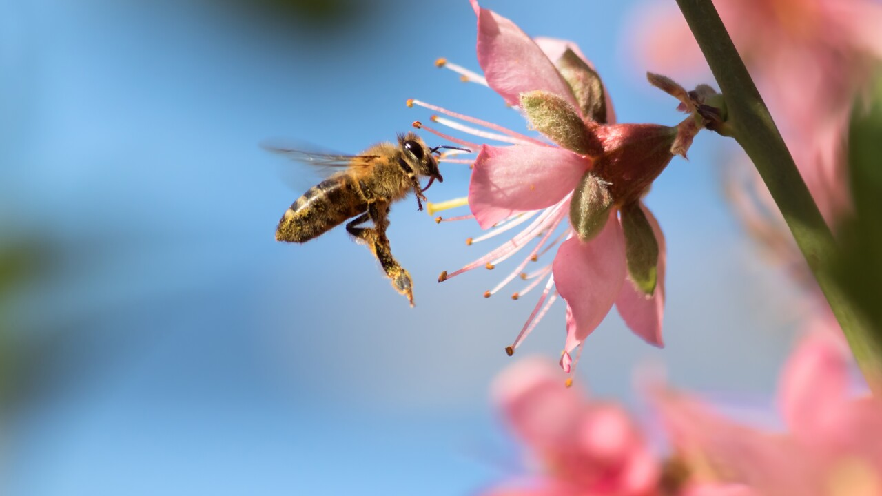 The importance of National Honey Bee Day