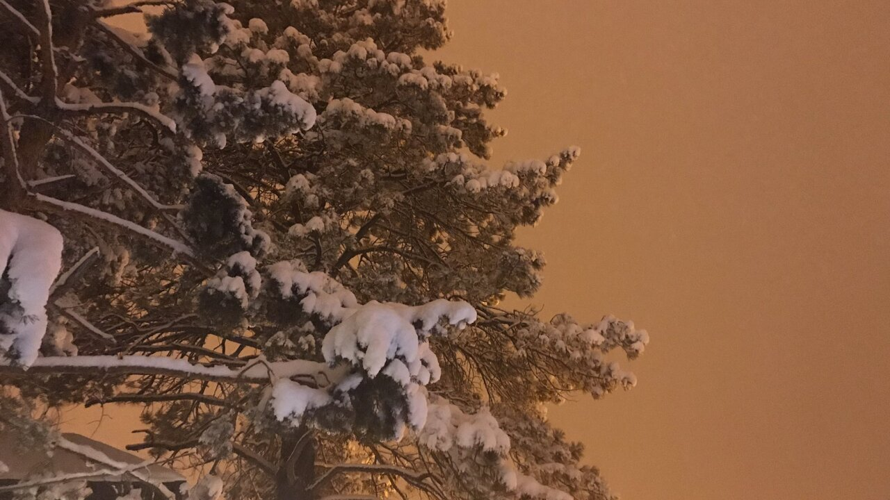 Snowy tree Flagstaff snow