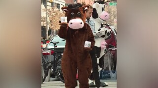 cows hand out toilet paper.jpg