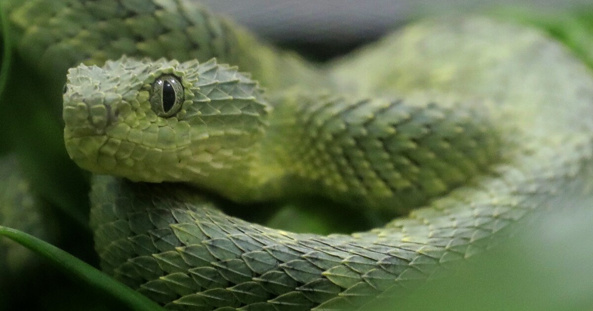 San Diego Zoo employee bitten by venomous snake, rushed to hospital