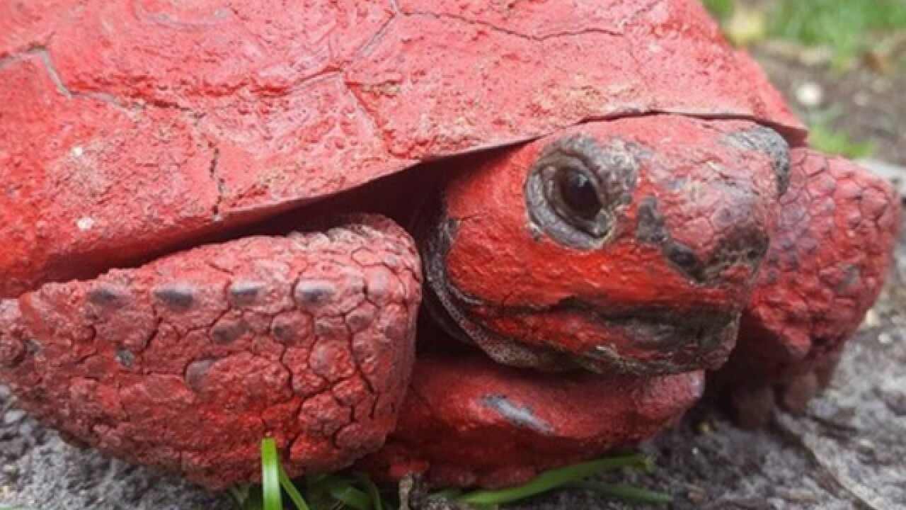 Man dumped red paint down gopher tortoise hole