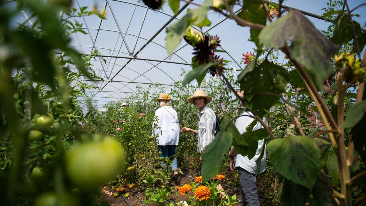 OPEN FARM DAY FLOWERS 8-3-21.jpg