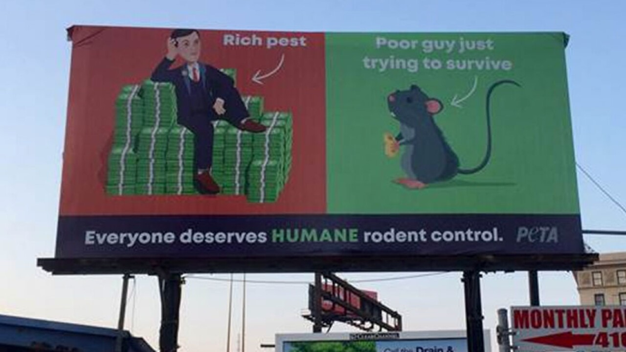 New billboard wants to save rats in Baltimore