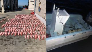 136 illegal fishing boats were intercepted in the Gulf of Mexico this year