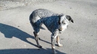 Dog that escaped from Brown County crash scene found, friends say