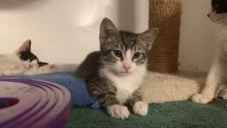 sdhs_kittens_adoption_061821.jpg