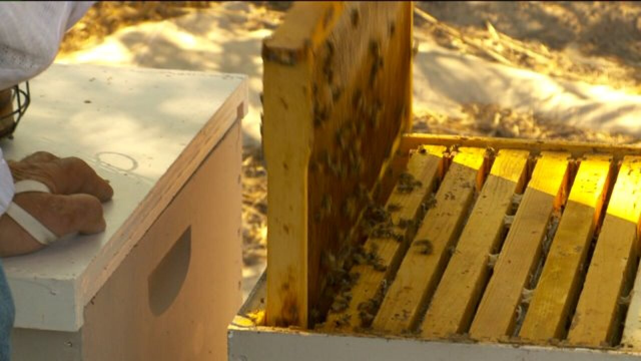 BYU students identifying viruses capable of killing bacteria that threaten beehives